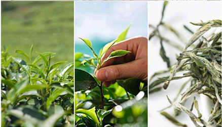 зеленый чай 13.jpg_.webp
